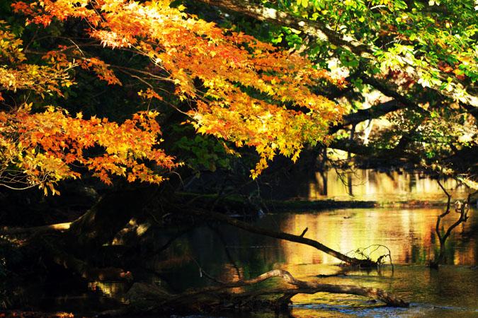 奥日光 湯ノ湖の紅葉1_a0263109_17562593.jpg