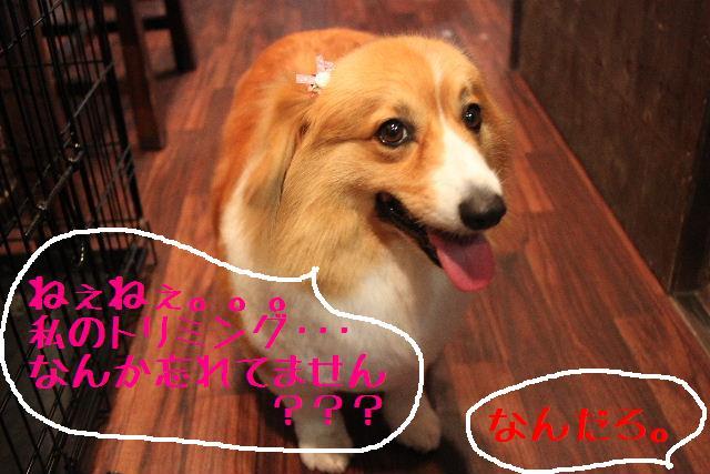 b0130018_065021.jpg