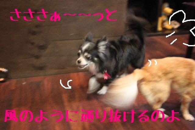 b0130018_2365435.jpg