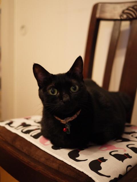 お椅子猫 しぇるのぇる編。_a0143140_20232289.jpg