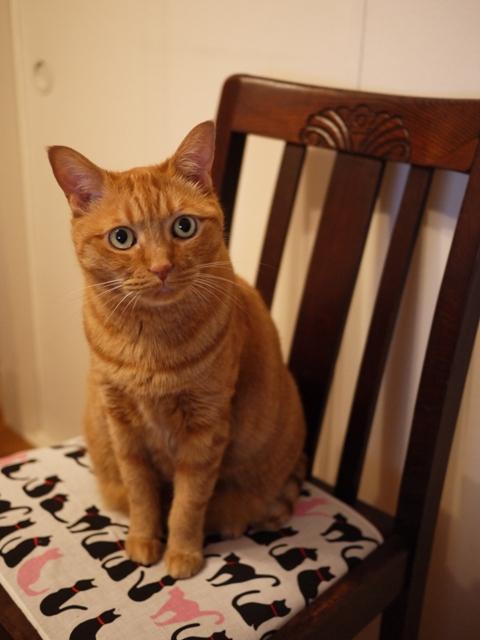 お椅子猫 しぇるのぇる編。_a0143140_2025731.jpg