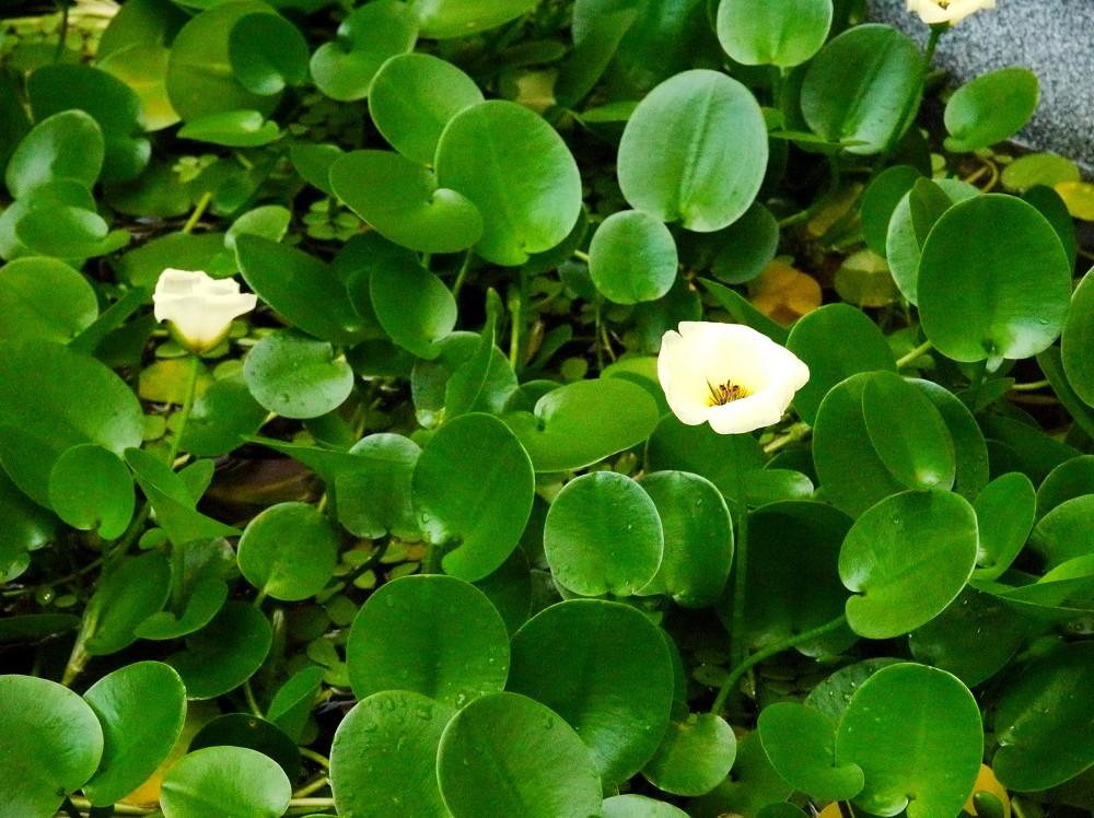 和歌山県植物公園緑花センター _b0093754_22344475.jpg
