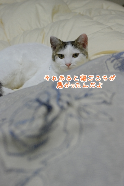 a0266372_20111769.jpg