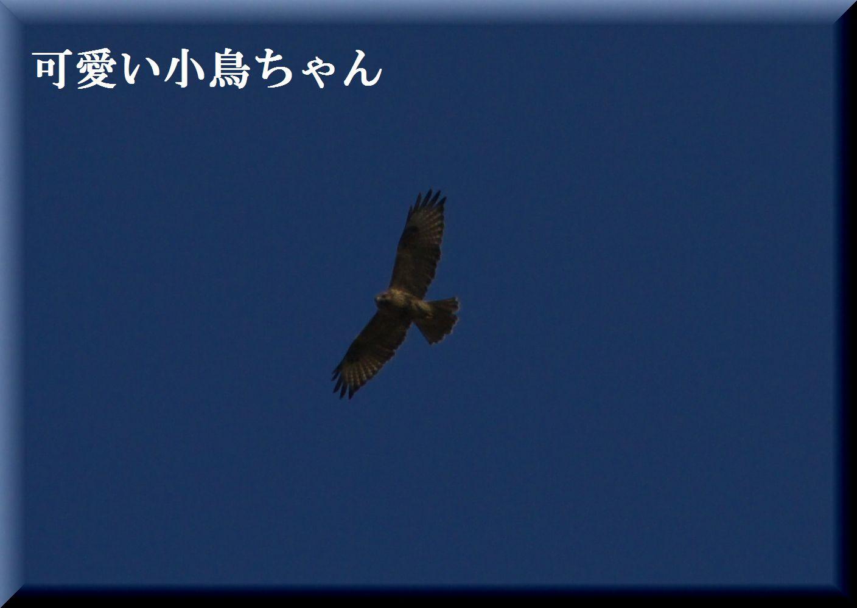 e0018678_15174836.jpg
