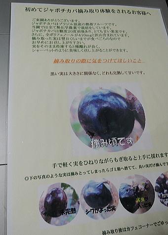 b0028299_2003848.jpg