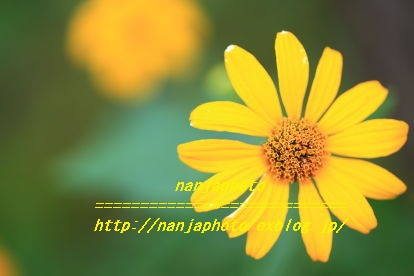 e0268999_4595761.jpg
