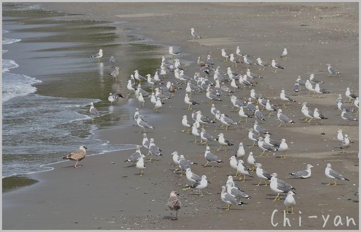 サギを見つけた 「千葉 保田海岸」_e0219011_1955789.jpg