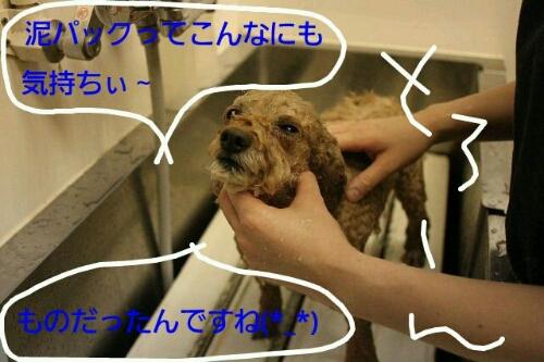こんばんは♪_b0130018_20384885.jpg