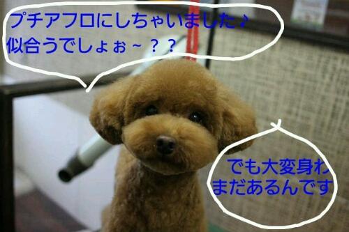 こんばんは♪_b0130018_2142592.jpg