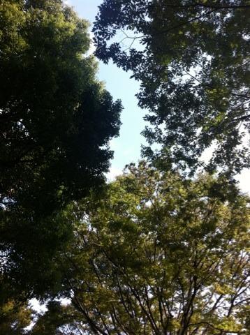 東京ベジフードフェスタへ!!_f0141419_6572018.jpg