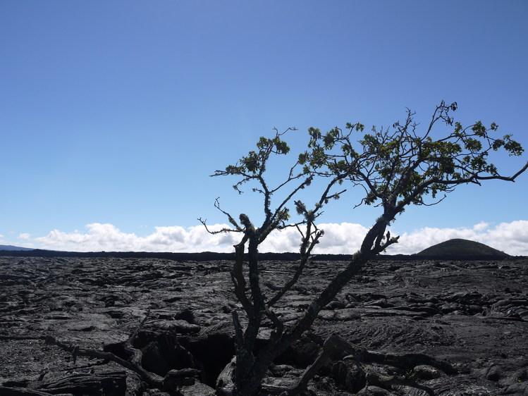 Big Island 神秘と癒しのエネルギー Vol.1_a0224731_1534116.jpg