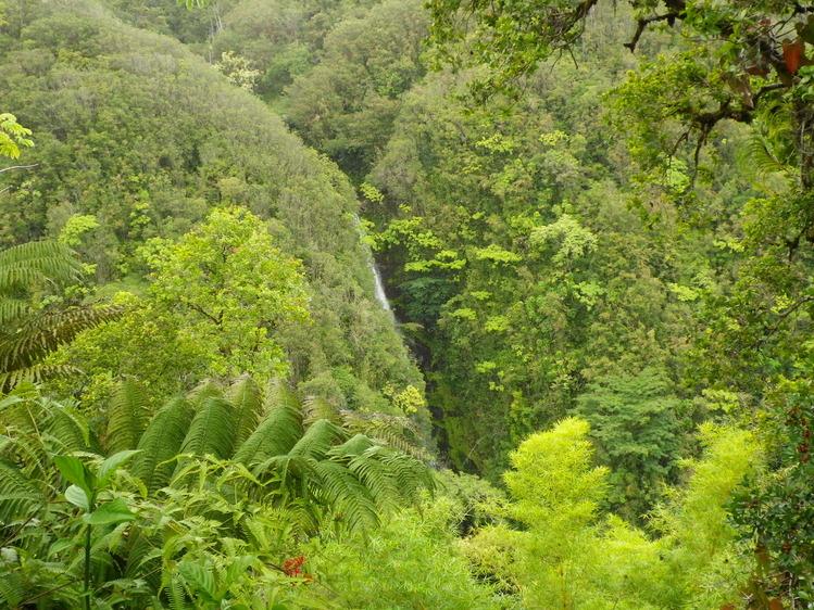 Big Island 神秘と癒しのエネルギー Vol.2_a0224731_18343328.jpg