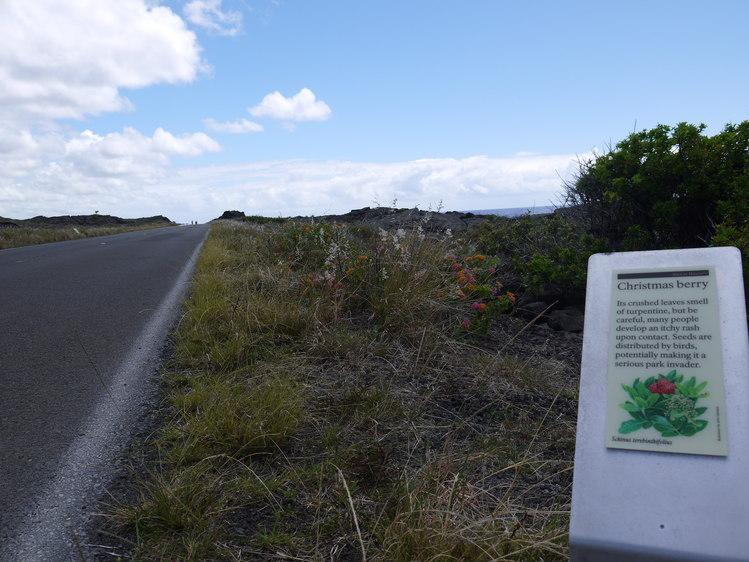 Big Island 神秘と癒しのエネルギー Vol.2_a0224731_19143927.jpg