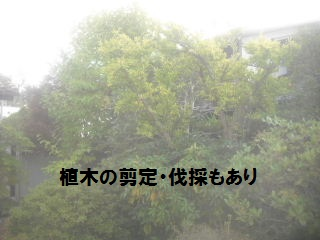 f0031037_2042287.jpg