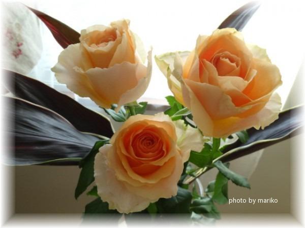 薔薇オークランド_d0165645_8543499.jpg