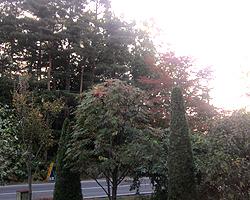 紅葉シーズン_d0050155_6484271.jpg