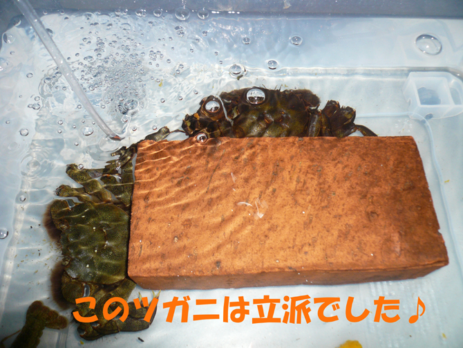 f0183484_2012434.jpg