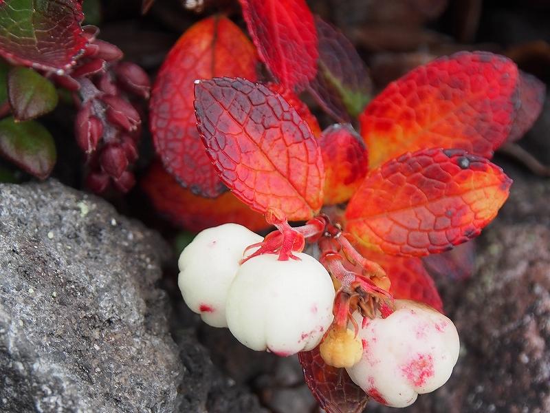 10月19日、樽前山の紅葉-最終編-_f0138096_21342547.jpg