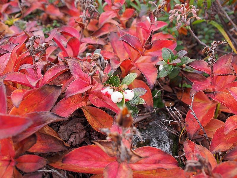 10月19日、樽前山の紅葉-最終編-_f0138096_2134473.jpg