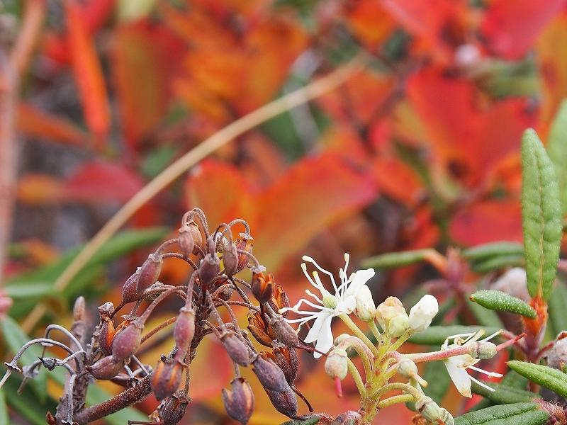 10月19日、樽前山の紅葉-最終編-_f0138096_2135029.jpg