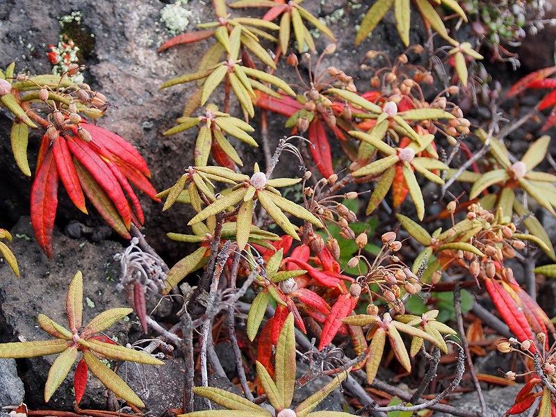 10月19日、樽前山の紅葉-最終編-_f0138096_21351079.jpg