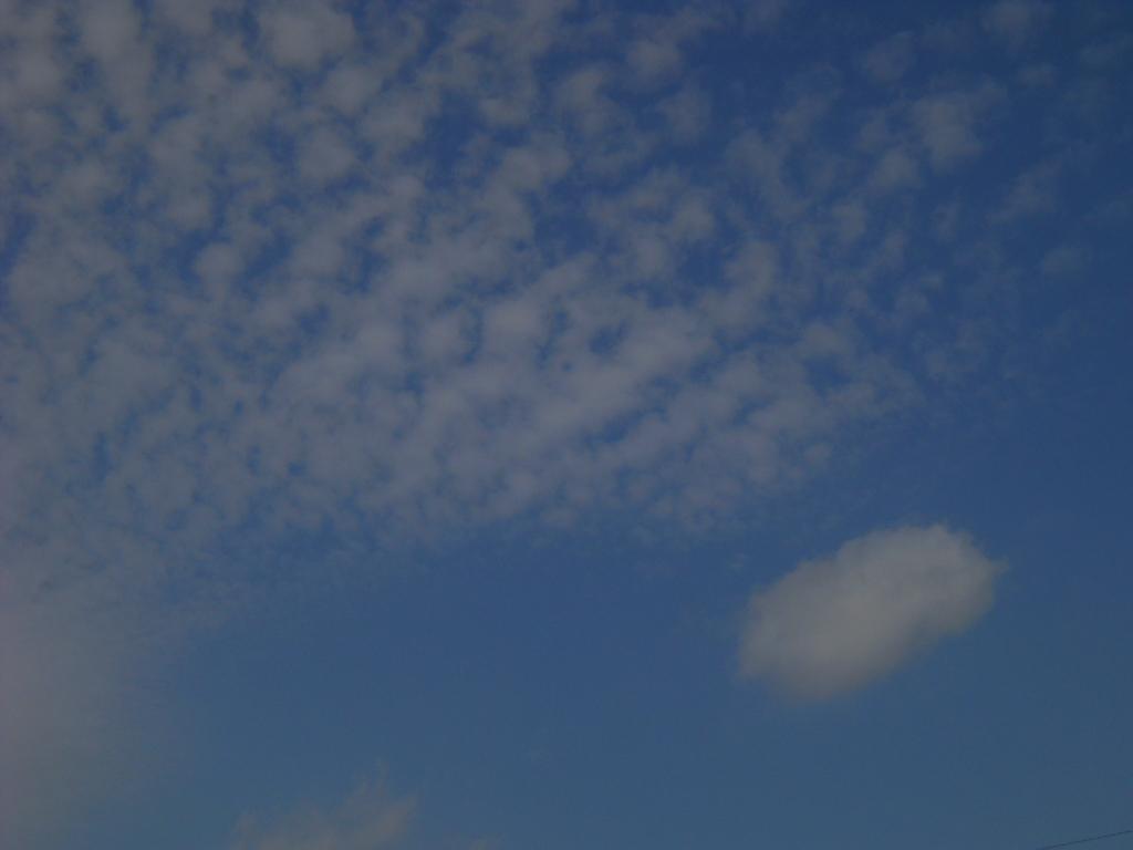秋のモザイク~鱗雲_f0146802_21204890.jpg