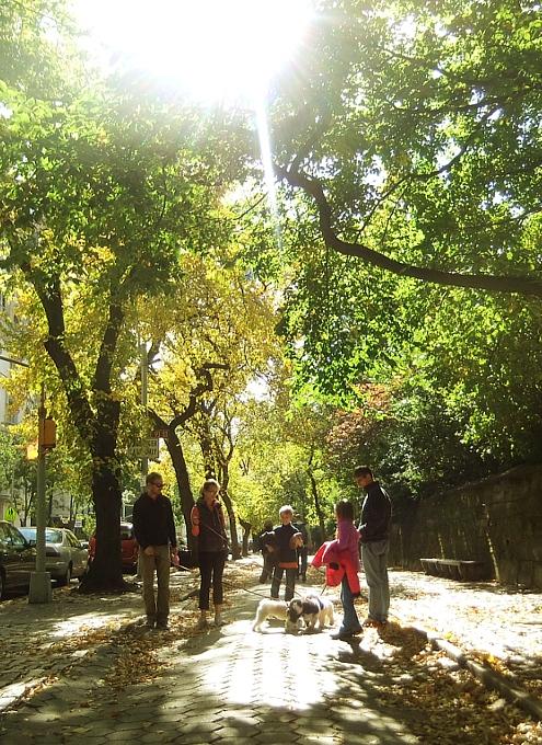 秋の陽射しで輝くニューヨークの美術館通り_b0007805_20111242.jpg