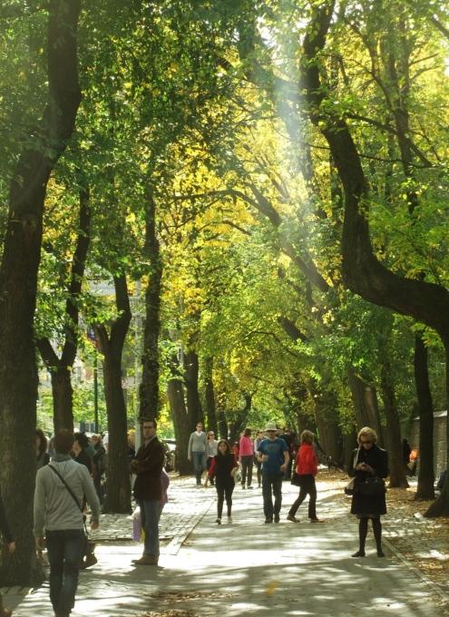 秋の陽射しで輝くニューヨークの美術館通り_b0007805_2094499.jpg