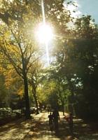 秋の陽射しで輝くニューヨークの美術館通り_b0007805_2095461.jpg