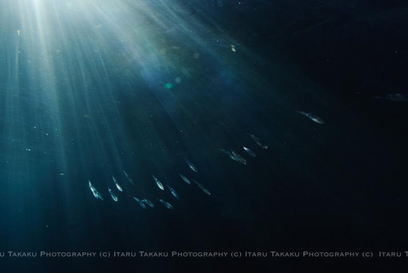 光の海_b0186442_2219237.jpg