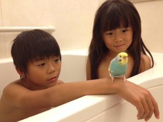 週に何度かはスーちゃんも一緒にお風呂へ・・・・・・と言っても、洗面器の船... みんなでお風呂♪