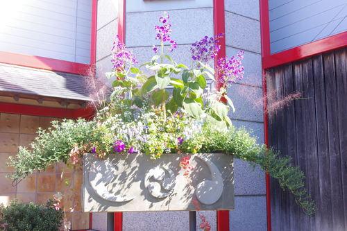 笠間の菊祭り 3_f0228967_22185366.jpg