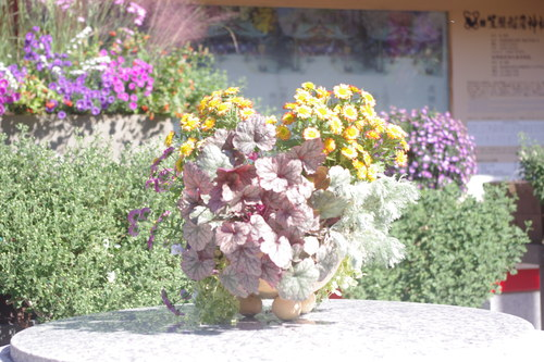 笠間の菊祭り 3_f0228967_22283026.jpg