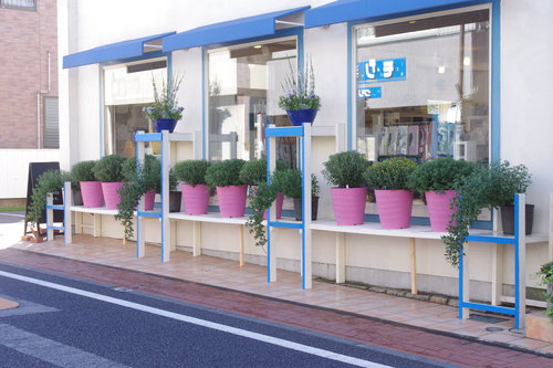 笠間の菊祭り 4_f0228967_22293613.jpg