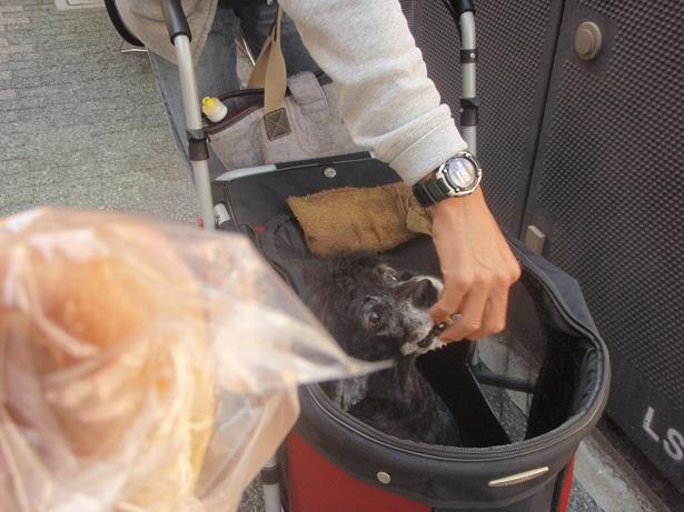 食肉市場のお祭り 行ってきました♪_f0096569_658330.jpg