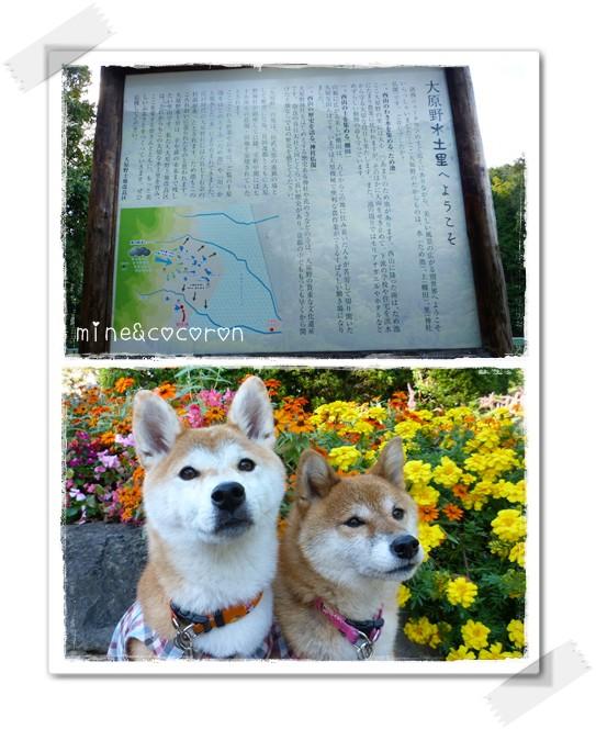 秋を満喫_a0053987_22432010.jpg