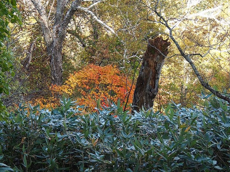 10月21日、風不死岳北尾根コース_f0138096_15241215.jpg