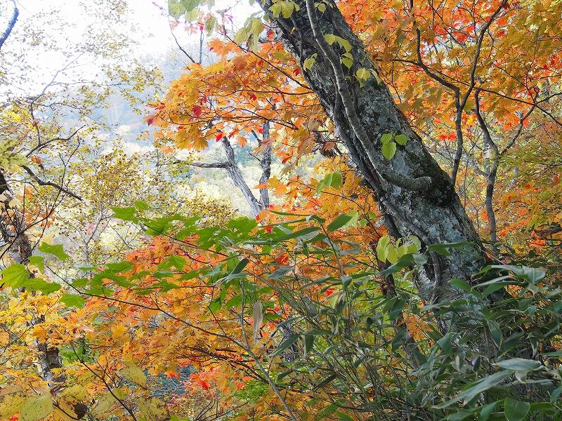 10月21日、風不死岳北尾根コース_f0138096_1524301.jpg