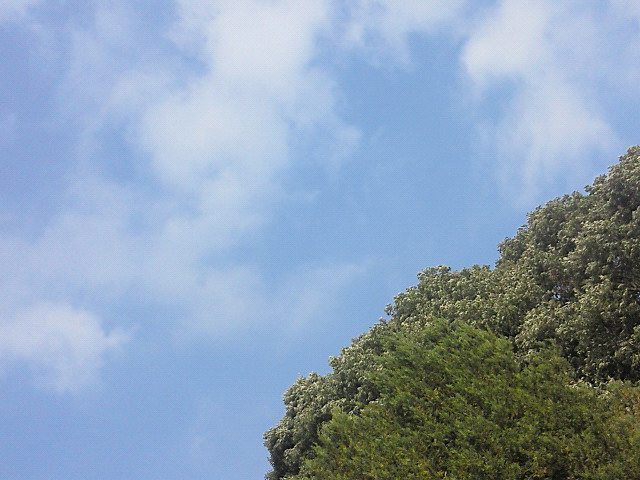 今日も過ごしやすい気温です♪_c0140599_12163760.jpg