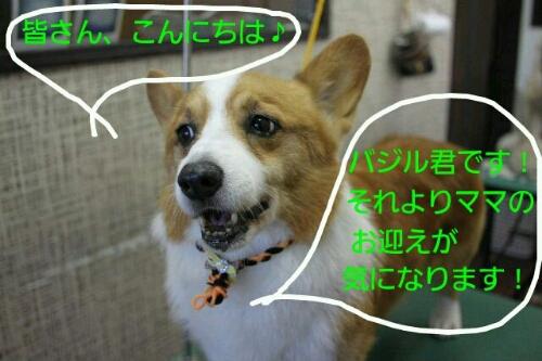 b0130018_1724463.jpg