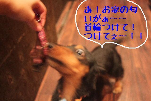 b0130018_23125339.jpg