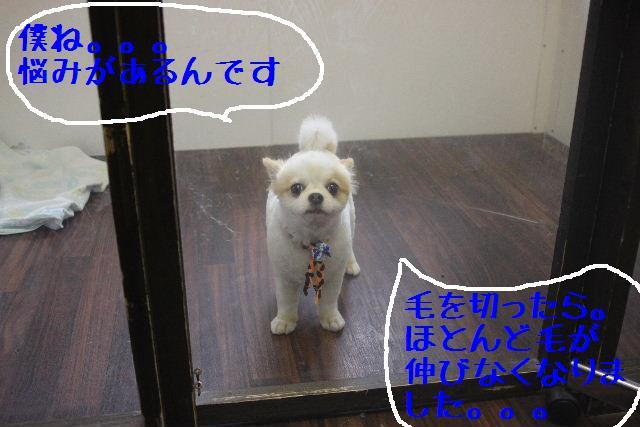 b0130018_23243743.jpg
