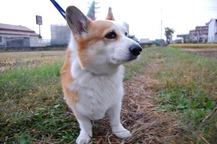 お散歩_e0236430_2146558.jpg
