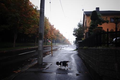 ロング散歩。_c0051132_20542078.jpg