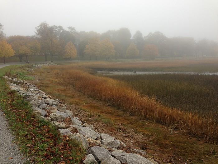 霧に覆われたバックコーブ_c0135045_11155456.jpg