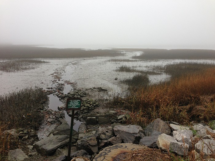 霧に覆われたバックコーブ_c0135045_11165068.jpg