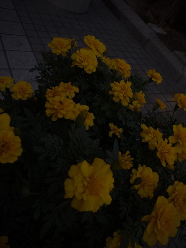 b0122664_11215513.jpg