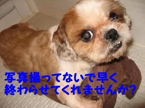 b0210702_2165920.jpg