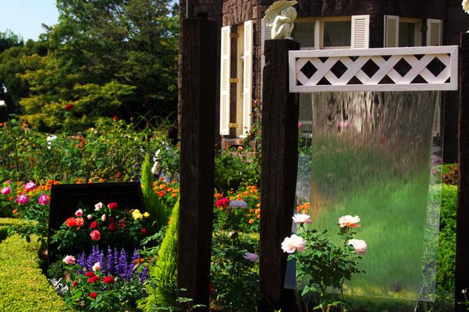 旧古河庭園の秋薔薇1_a0263109_10374122.jpg