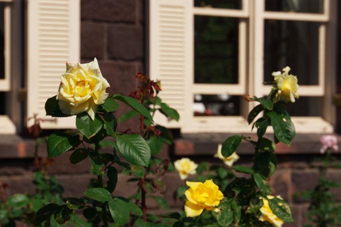 旧古河庭園の秋薔薇1_a0263109_10392172.jpg